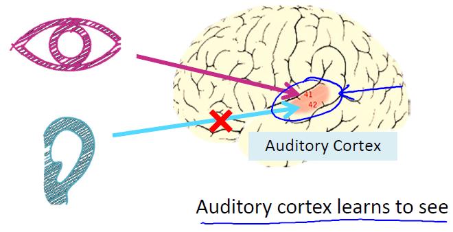 听觉皮层实验-我爱公开课-52opencourse.com